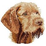 Vizsla Wire-haired